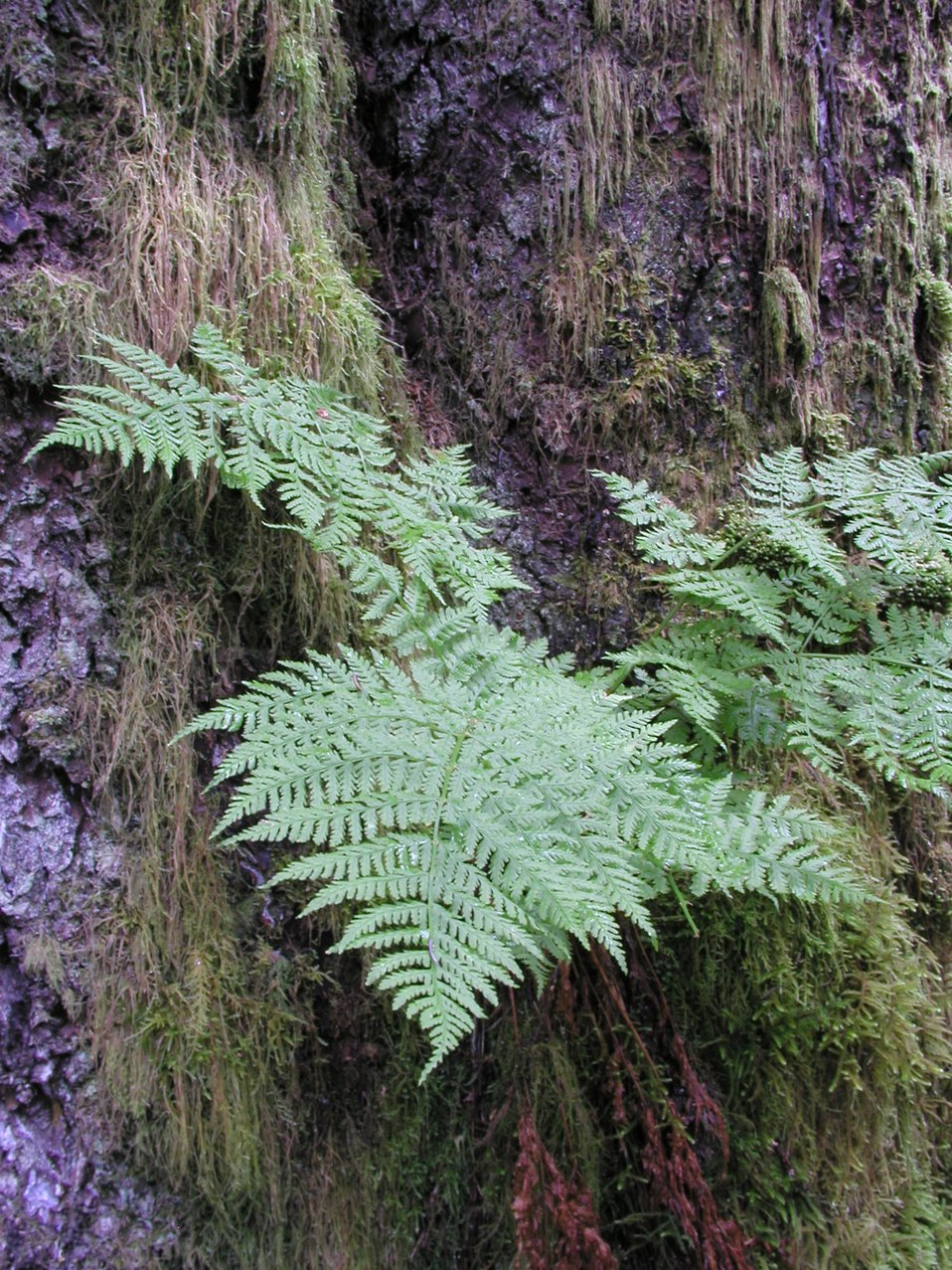 Ferns, moss, and bark in the forest on Spruce Island
