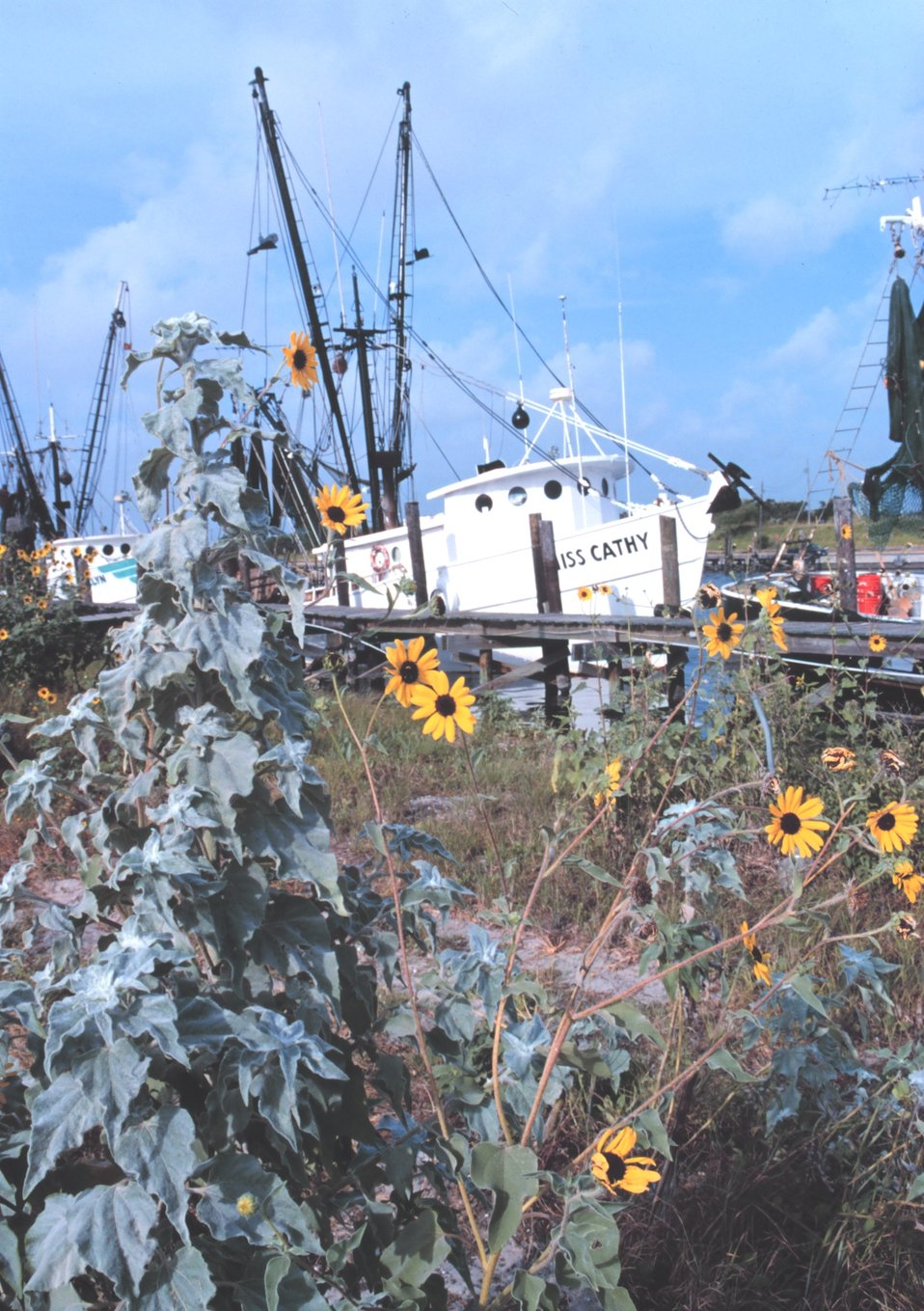 Shrimp boats and sunflowers at Conn Brown Harbor