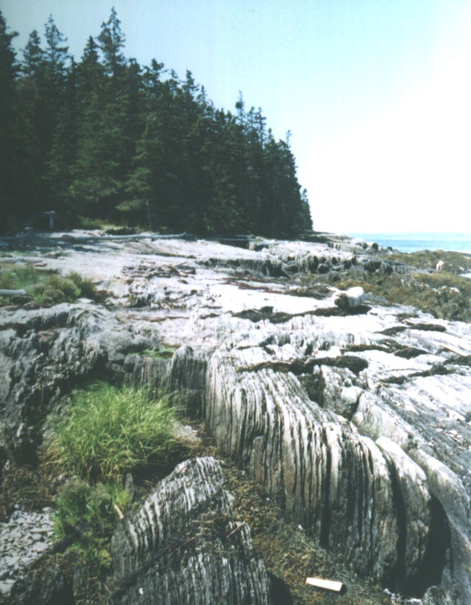 Vertical slate on 700 Acre Island.  Erosion of this material provides sediment for Philbrook Cove Beach.