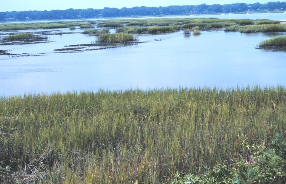 Wetlands along the Beaufort River