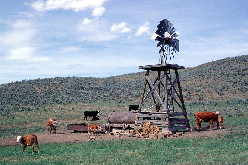 Immigrant Flats, Baker City RA. Old wind mill and cattle.
