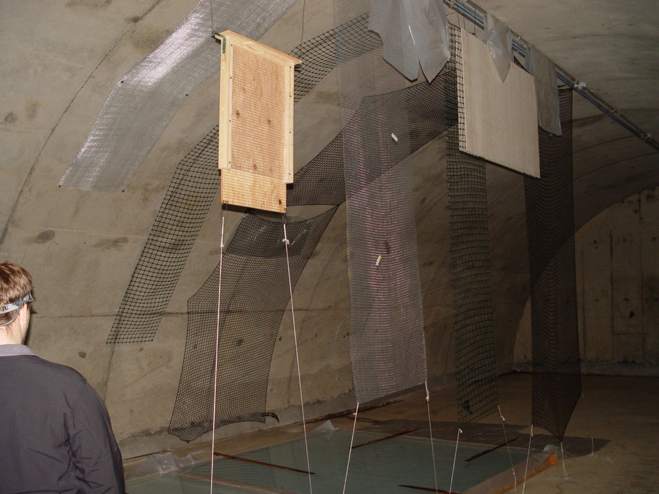 Interior of bunker with roosting substrate