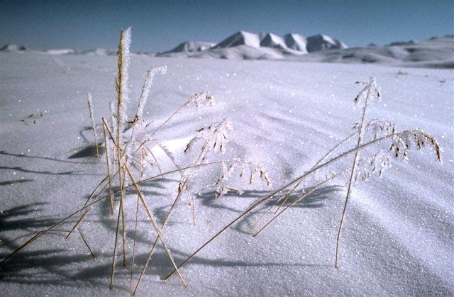 Winter ice, Arctic NWR