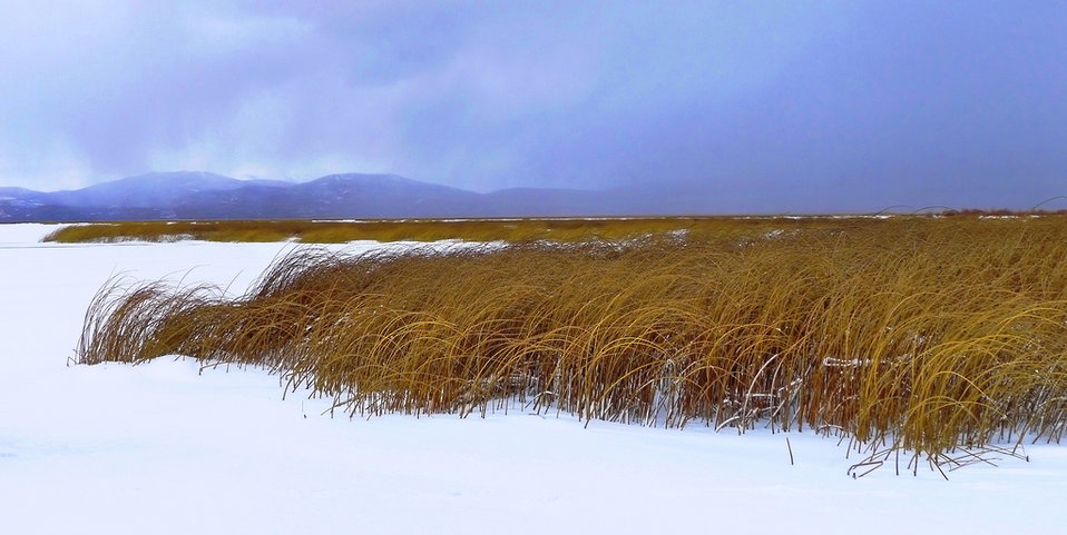 a snow squall approaches