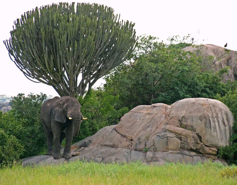 Serengeti kopje