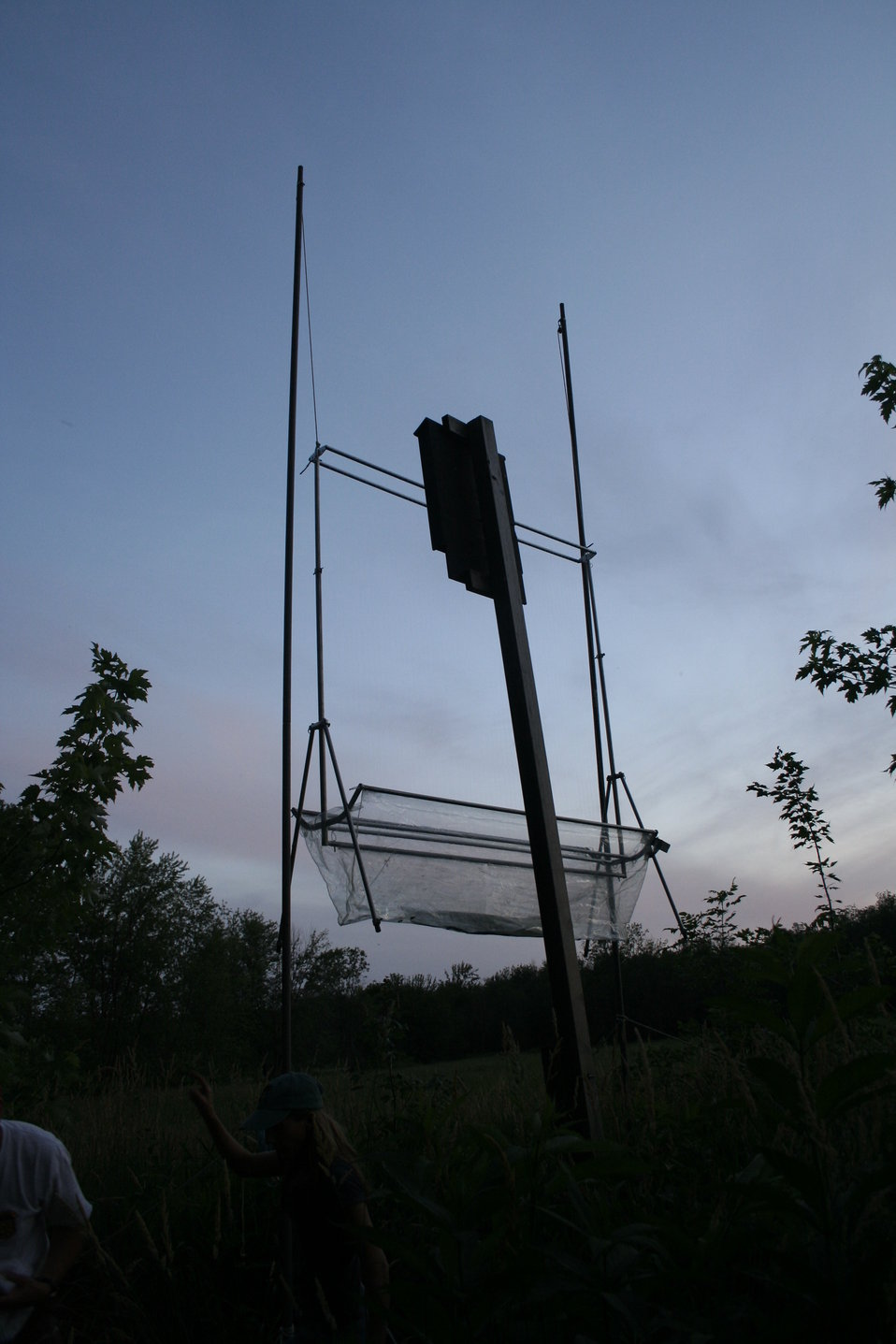 Harp trap and bat house