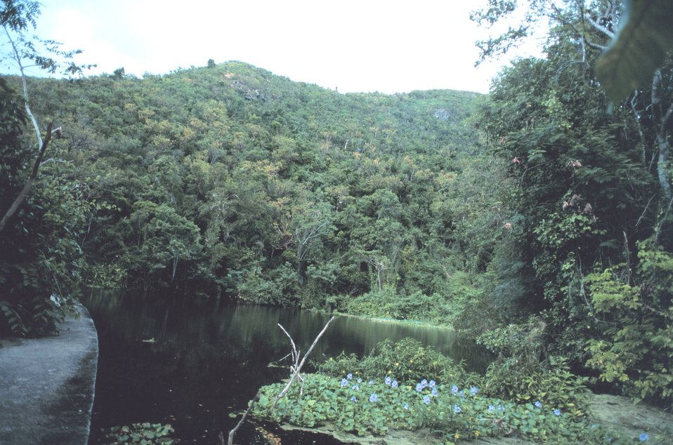 The Virgin Islands - tropical or desert?   Shallow stream and rainforest on the west end of St. Croix.