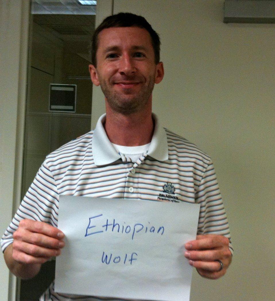 Jeff Parker, 'Ethiopian Wolf,' Credit: USFWS