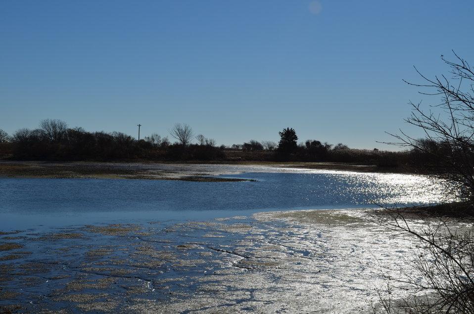 Shimmering mud at Trustom Pond National Wildlife Refuge (RI)