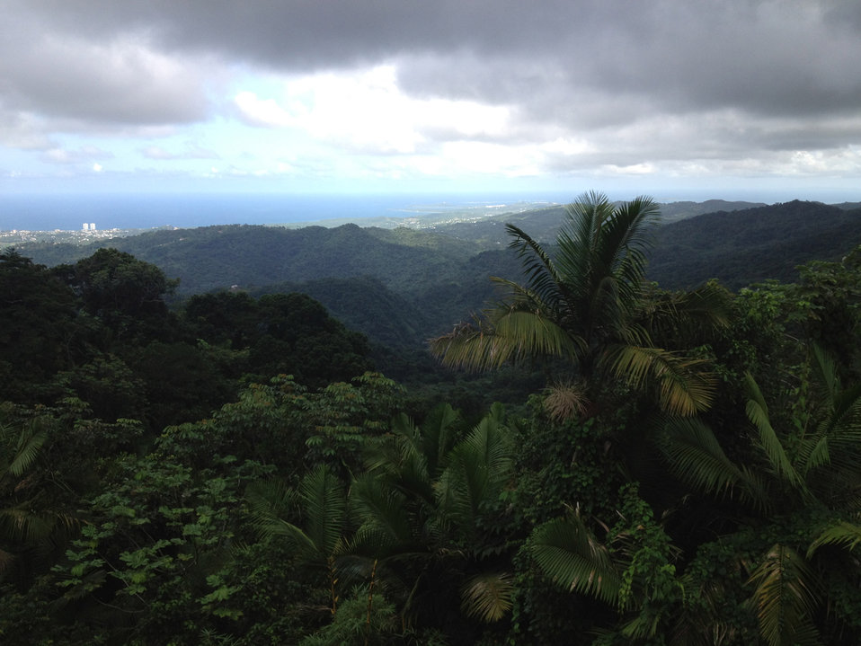 Rainforest view