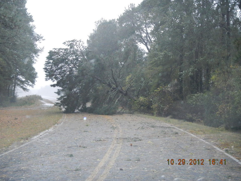 Downed tree at Chincoteague National Wildlife Refuge (VA)