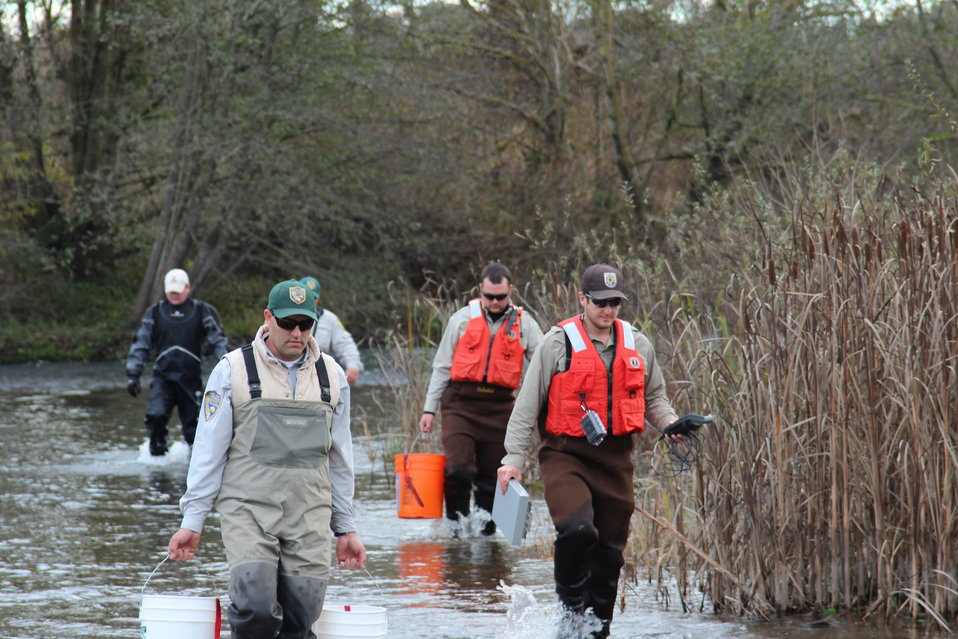 Biologists wade into the river
