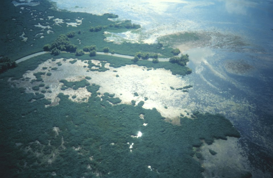 Aerial view of interior Mississippi Delta marshes
