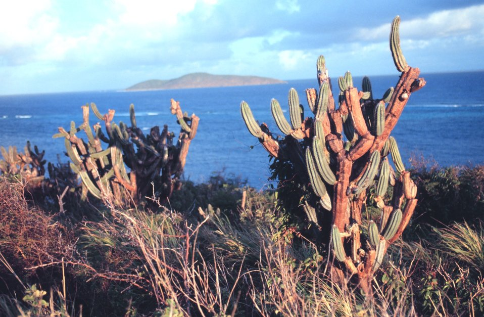 The Virgin Islands - tropical or desert?  Cactus on the north side of St. Croix looking toward Buck Island Reef National Monument.
