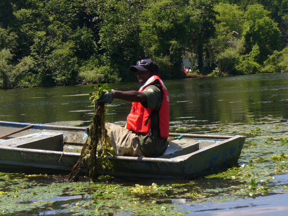 Pulling invasive species