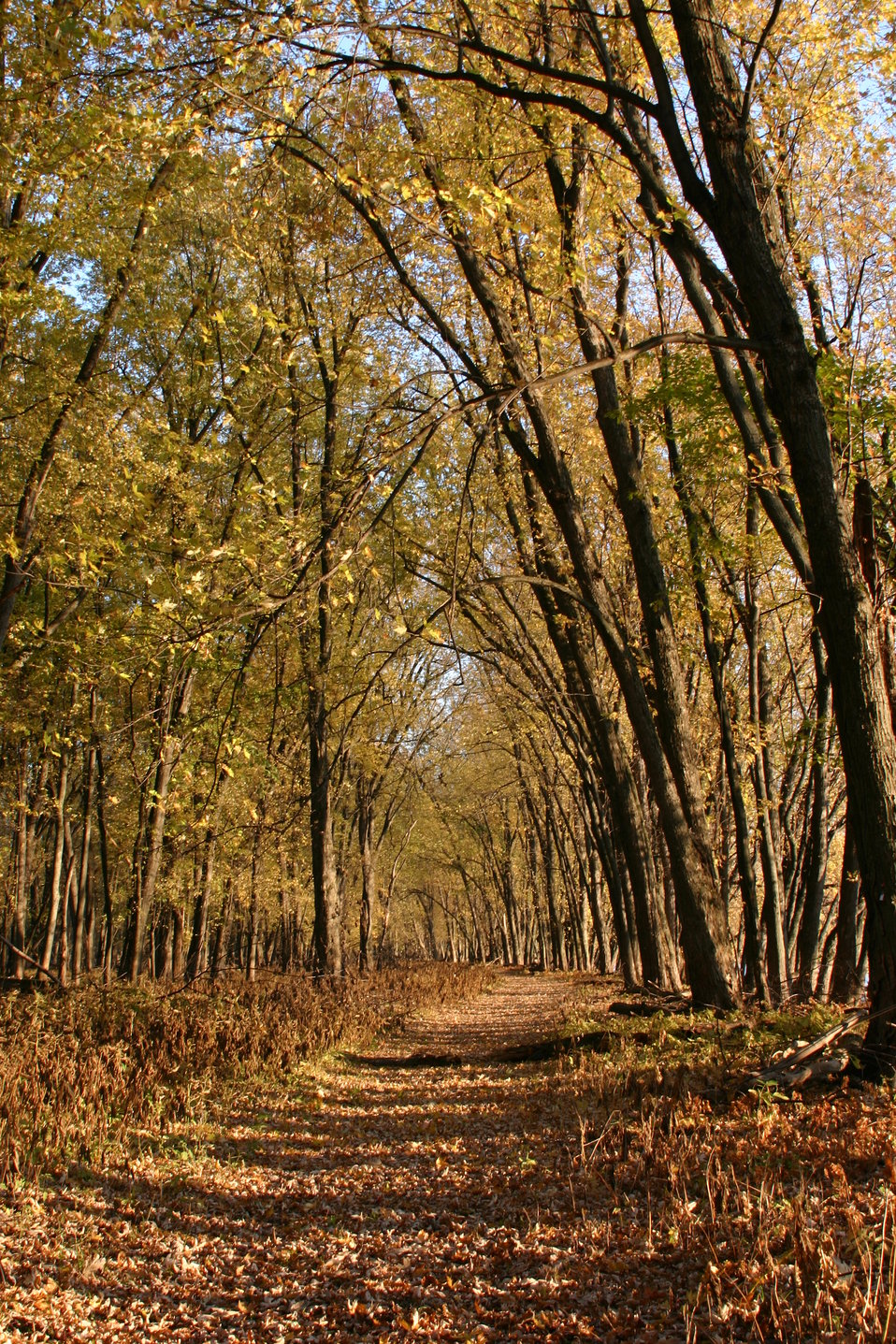 Jeep Trail in Fall 2011