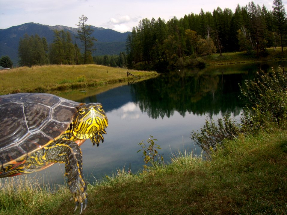 Pondzie the Turtle Loves Creston National Fish Hatchery