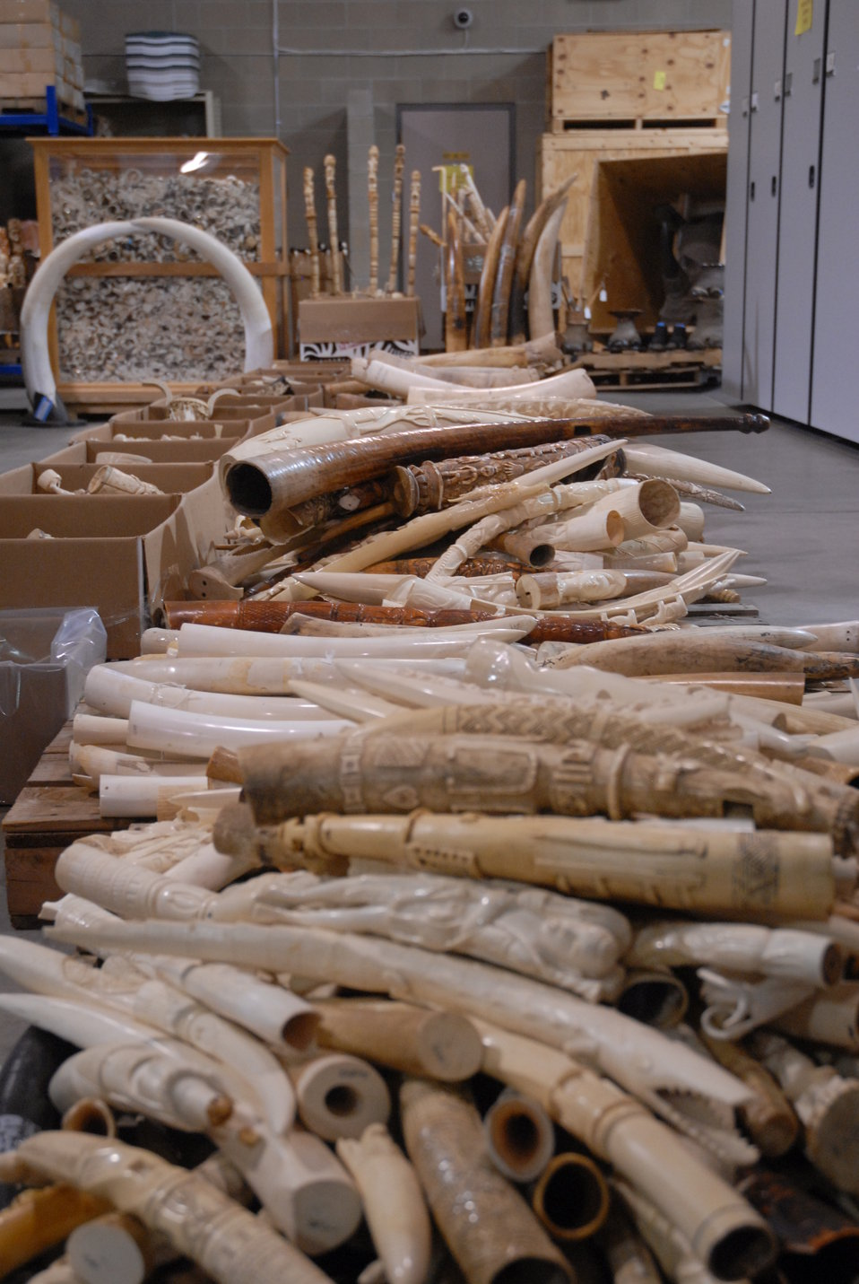 Carved ivory tusk stockpile slated for destruction in the crush.