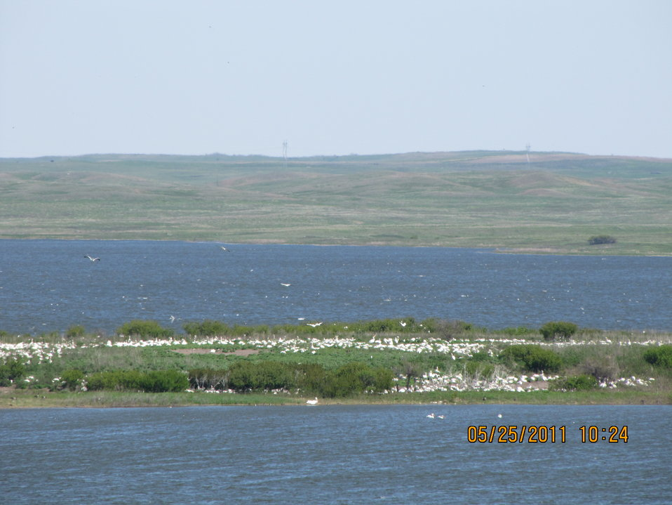 View of birds on nesting island in Chase Lake NWR