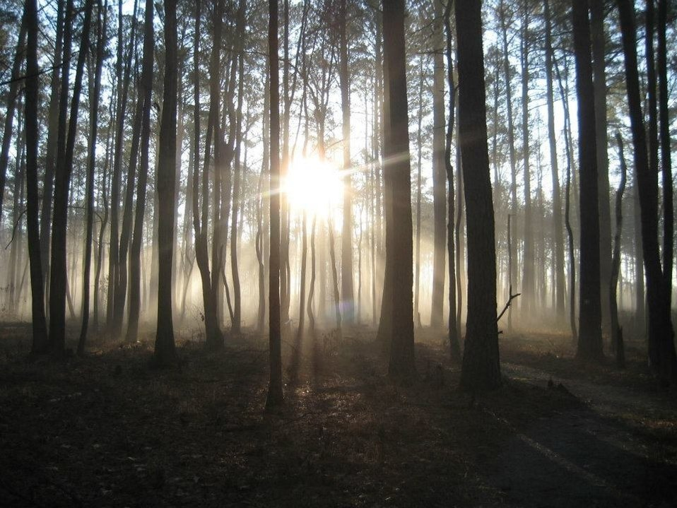 Photo of the Week - Foggy Morn at Great Dismal Swamp National Wildlife Refuge (VA)
