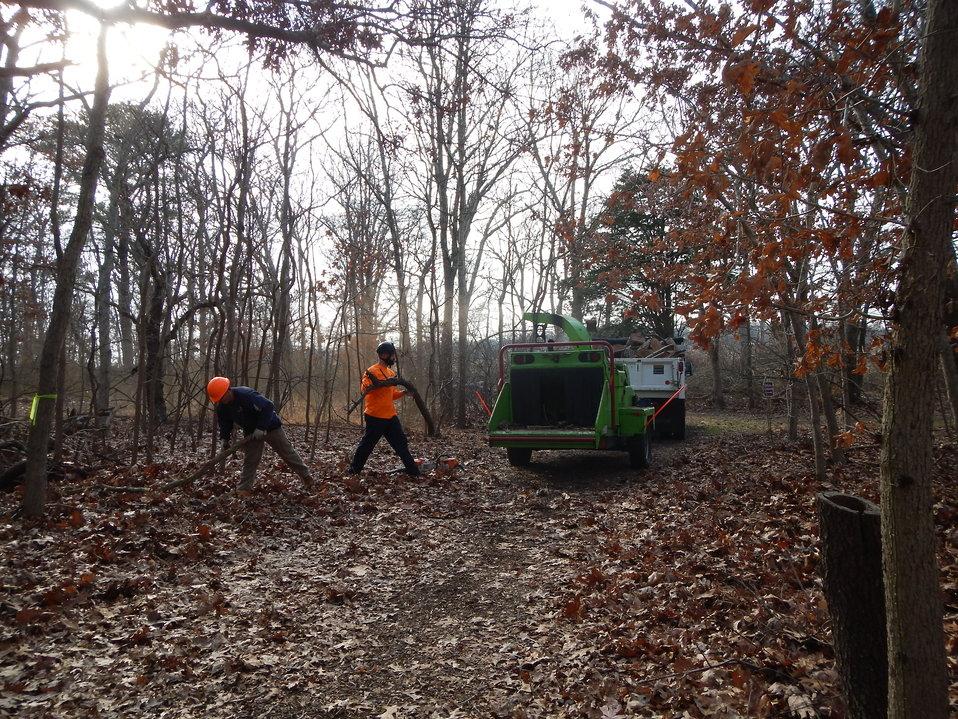 Tree removal at Wertheim National Wildlife Refuge