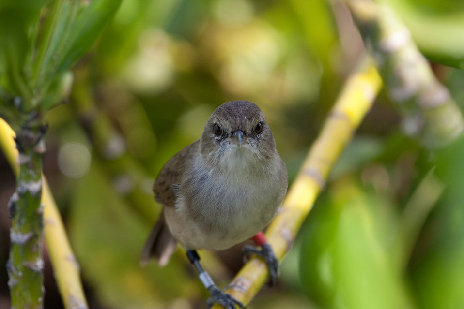 millerbird on its new home turf