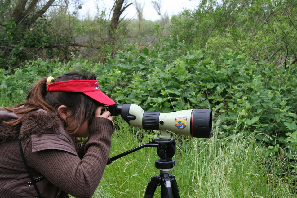 Birding on Stone Lakes National Wildlife Refuge