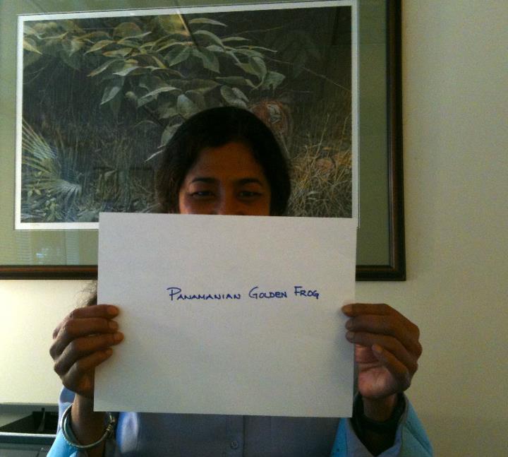 Krishna Roy, 'Panamanian Golden Frog,' Credit: USFWS