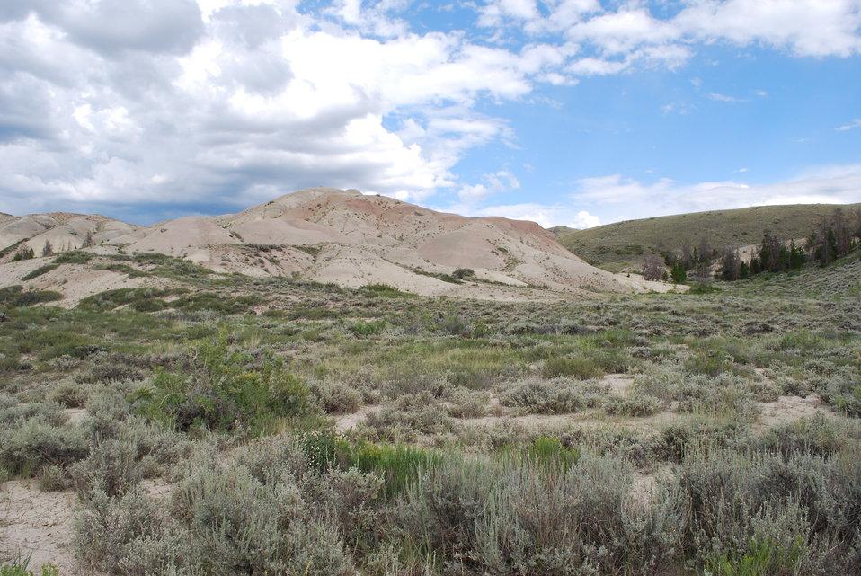 Penland Beardtongue Habitat