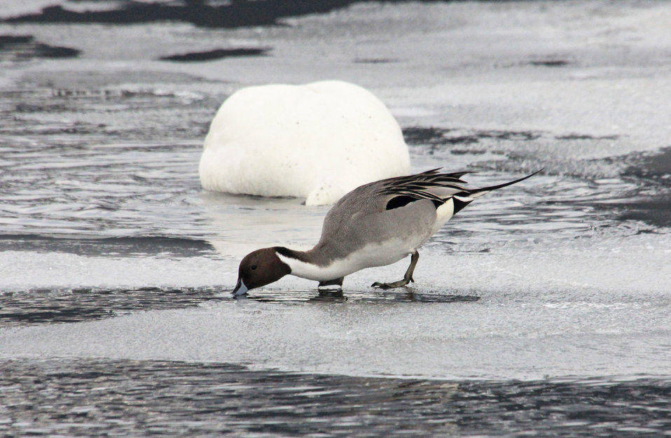 Dipping a Beak