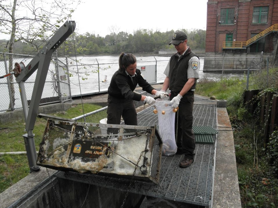 Service Employees at St. Joe River, Michigan checking Sea Lamprey Traps.