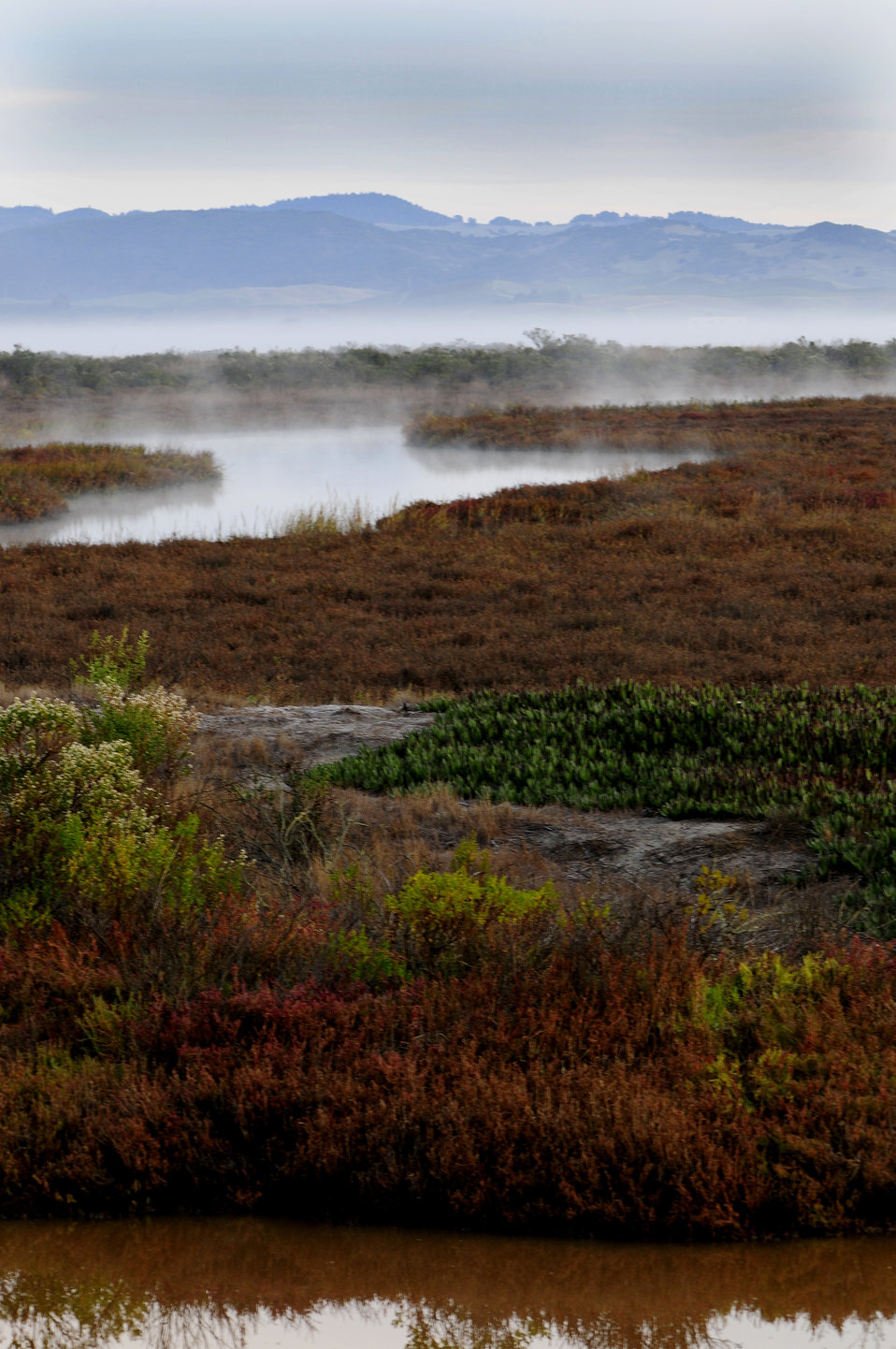 San Pablo Bay marsh