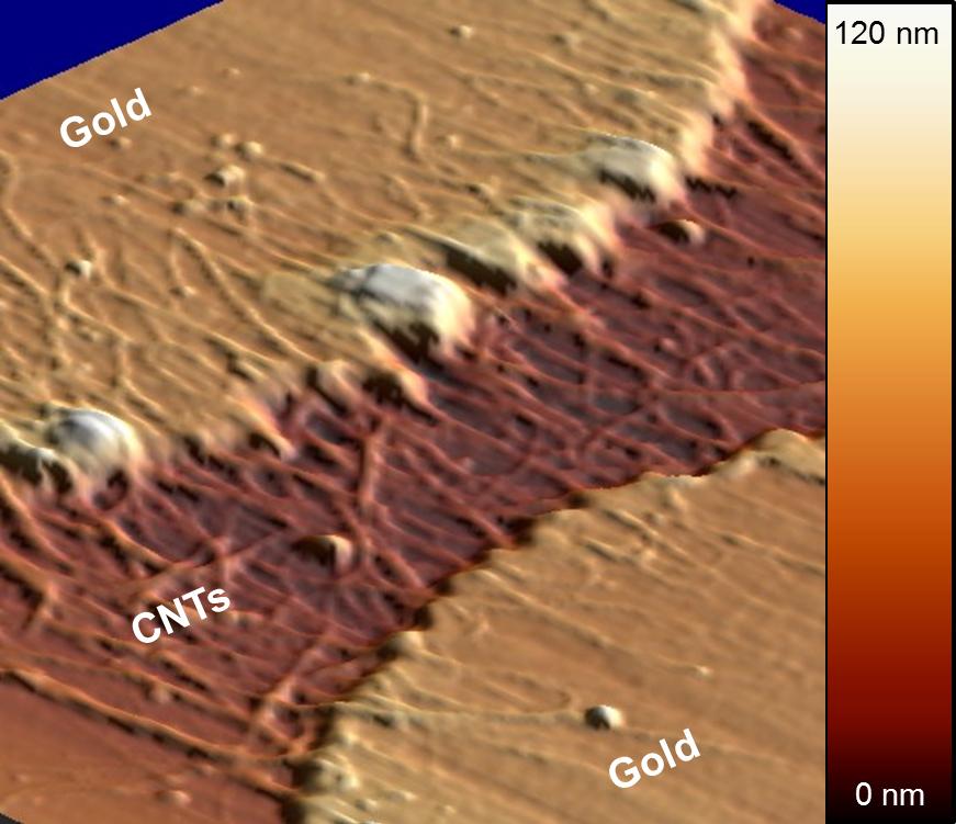 Gold Electrodes