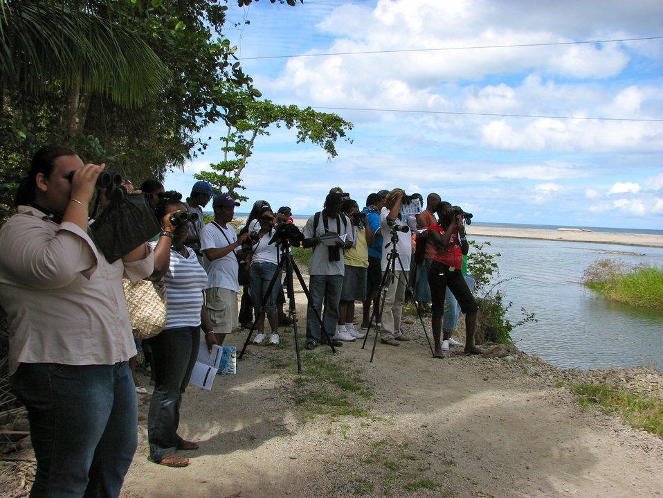 Birding at Layou - 5