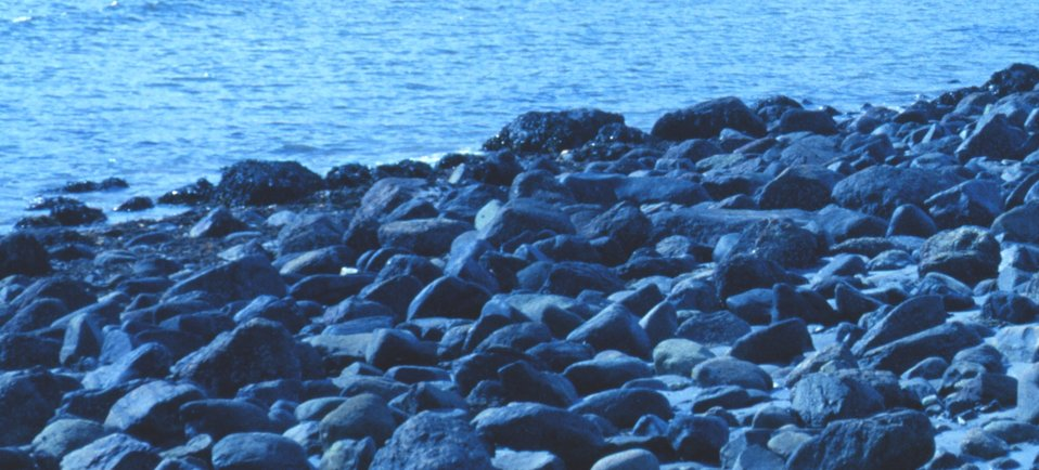 Detail of cobble beach at Odiorne Point State Park.