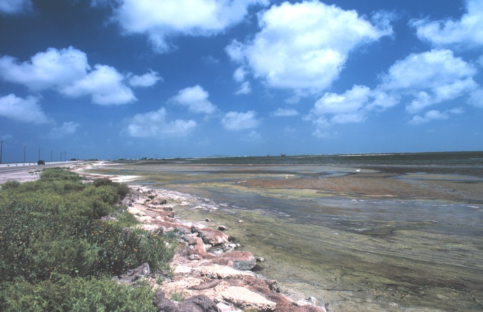 Part of Cayo del Oso Creek which empties into Corpus Christi Bay