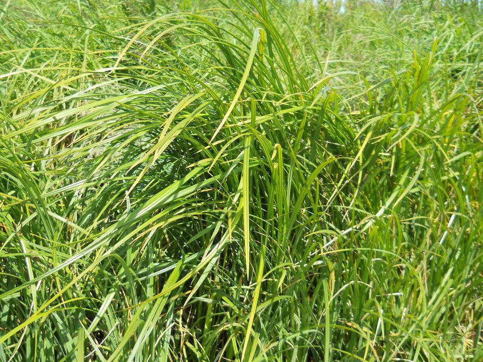 Grassland Closeup