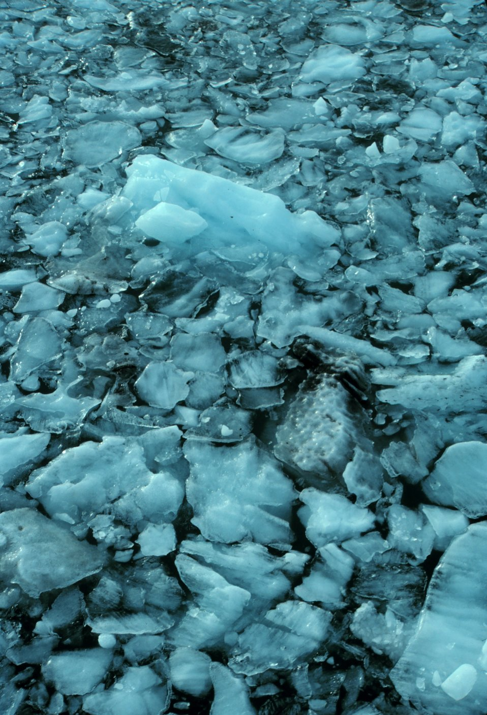 Glacial ice chunks in Icy Bay.