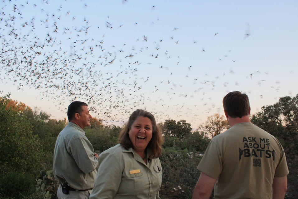 BCI and US Forest Service staff observe bats
