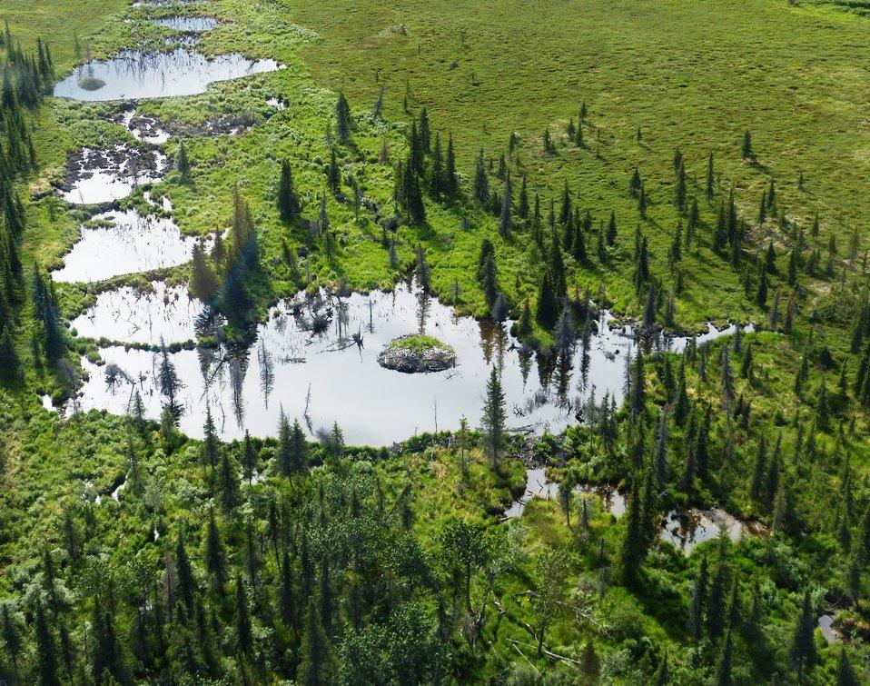 Yukon Delta NWR Wetlands
