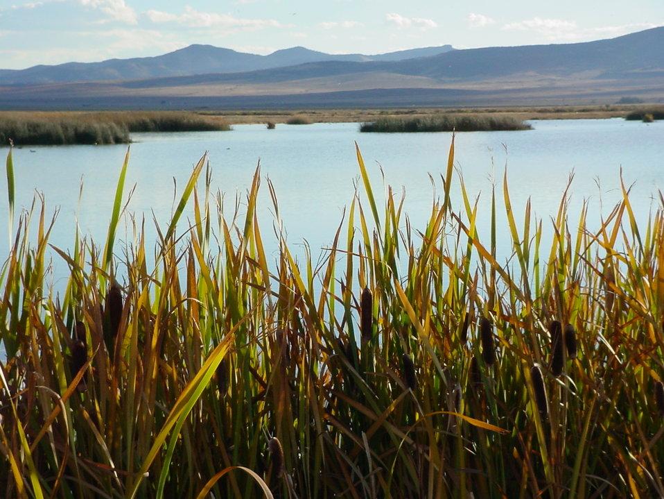 Wetlands at Monte Vista National Wildlife Refuge