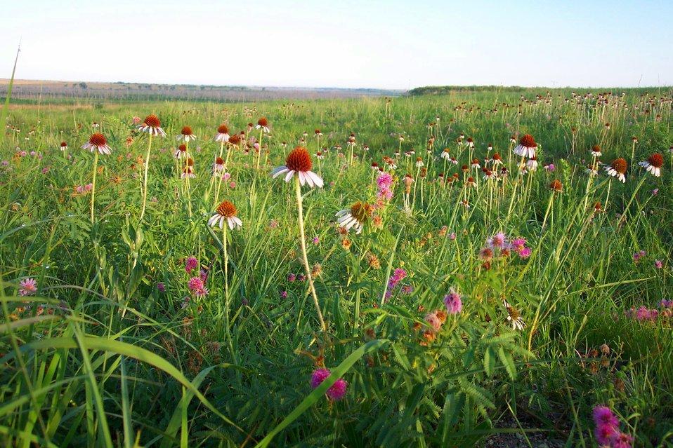 Kirwin Prairie Flowers