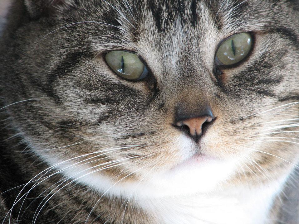 Cats eyes closeup
