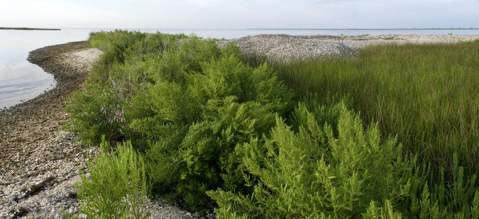 Shell middens at Grand Bay