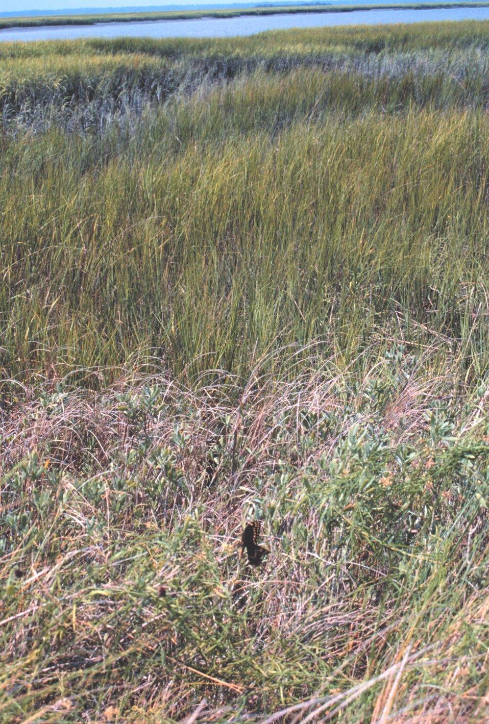 Sea grass and marsh