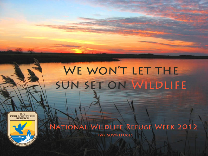 We Won't Let the Sun Set on Wildlife