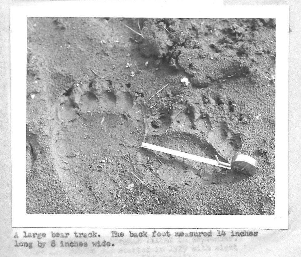 (1958) Bear Track