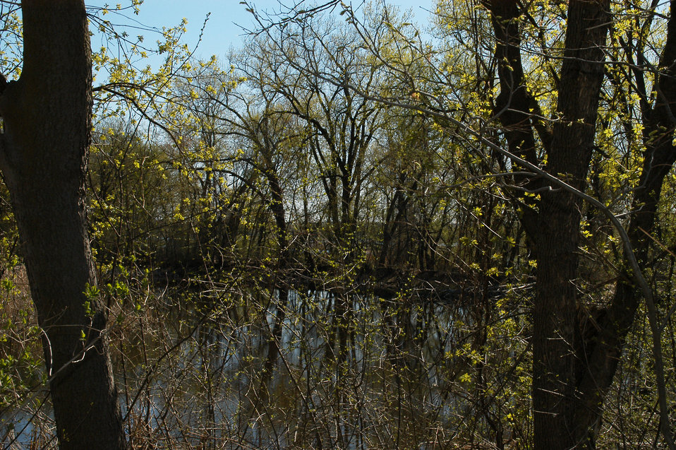 Springtime at the Bass Ponds