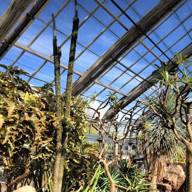 Desert Room of the U.S. Botanic Garden
