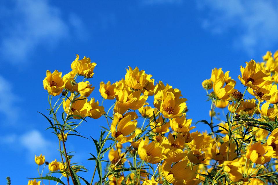 Sky meet flowers